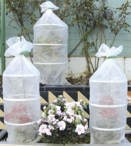 Proteger plantas del frio