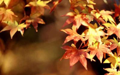 Mayo: Consejos de otoño